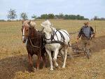 300px-Farmer_plowing.jpg