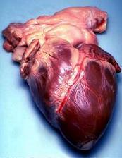 serce.jpg