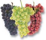 winogrona.jpg